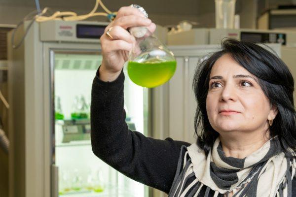 Forskaren Yagut Allahverdiyeva-Rinne håller upp och tittar på en flaska som innehåller grön vätska. med